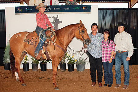 Hershbergers Performance Horse Sale