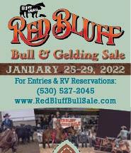Red Bluff Bull Sale