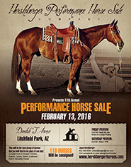 Hershberger Horse Sale